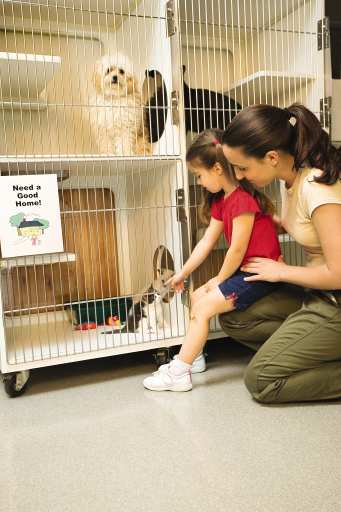Adopting pets not all you can do for shelters