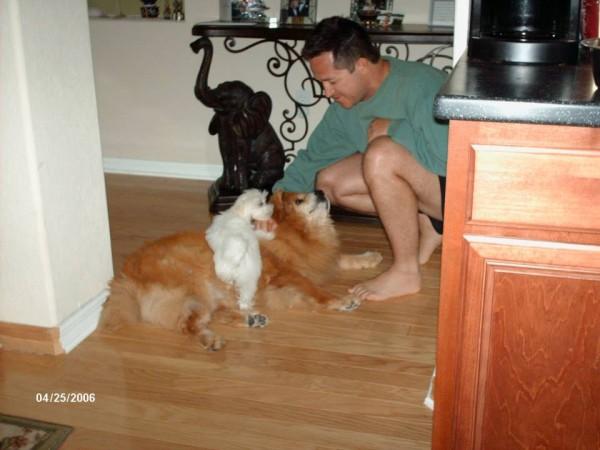 Aarff Pet Sitting