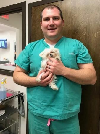 Capital Veterinary Specialists